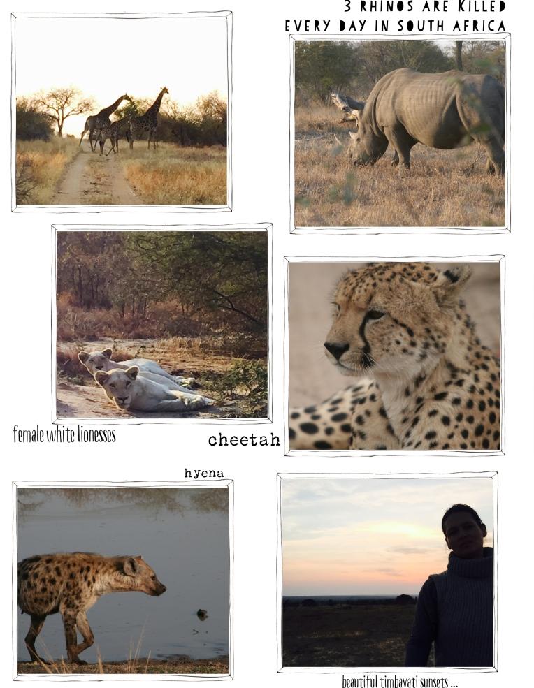 safari 2 cornel at hellohartdotcom